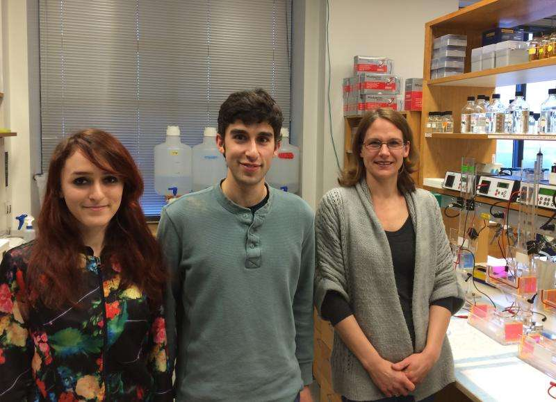 Messenger RNA-associated protein drives multiple paths in T-cell development, penn study finds