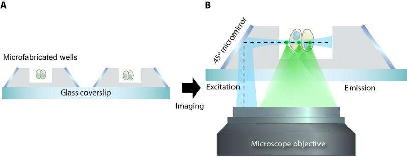 Microfabrication leads to a new microscopy method