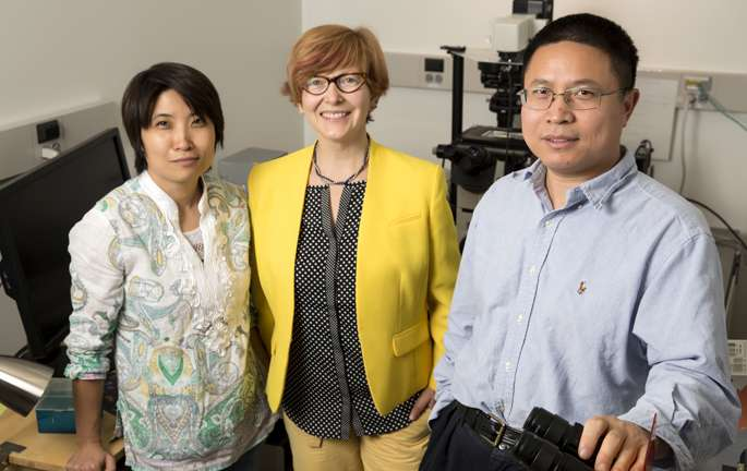 Microtubules act as cellular 'rheostat' to control insulin secretion