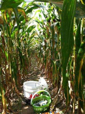 More food, low pollution effort gains traction