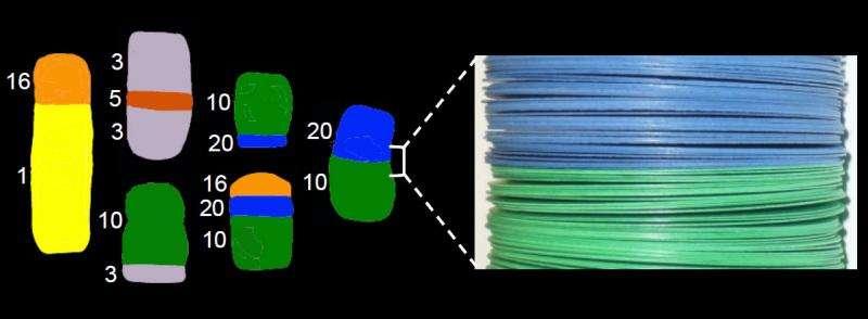 Multilaminar chromatin model explains the structure of chromosomal aberrations in cancer cells