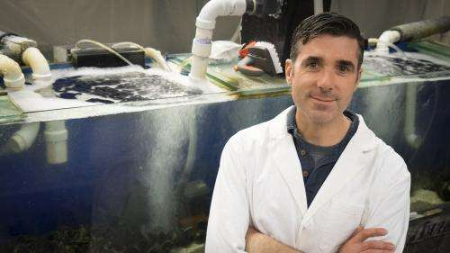 New adhesive could work underwater, in wet conditions for medicine and industry