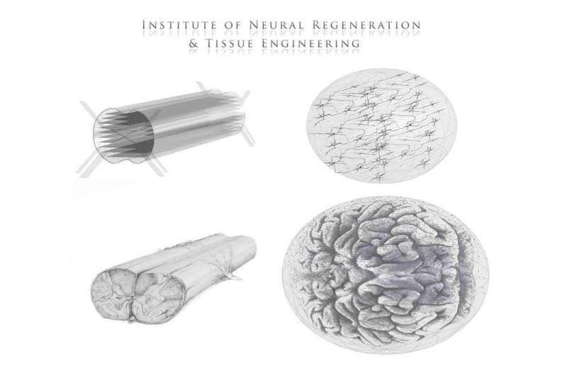 New advancements in 3-D designs for neural tissue engineering