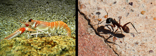 New biofertilizer made from exoskeletons of crustaceans and insects