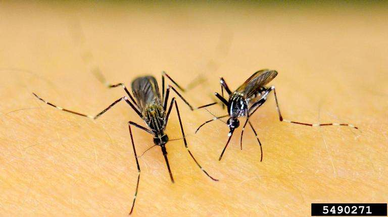 New device provides chikungunya test results in an hour