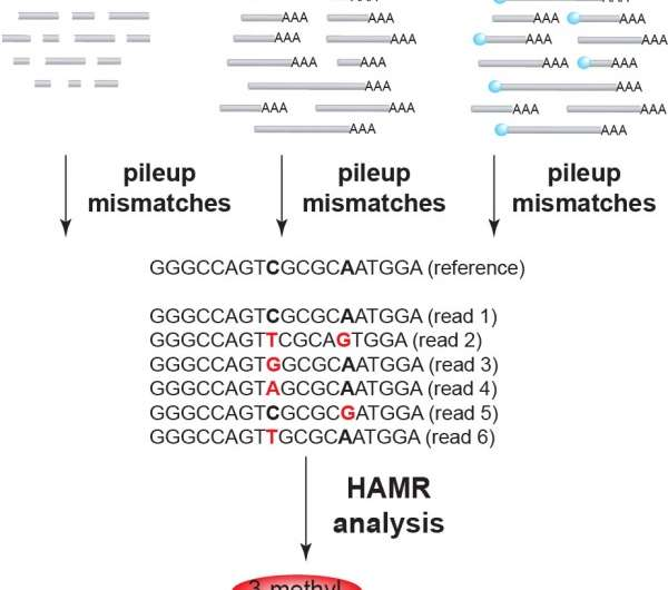 New form of mRNA regulation characterized