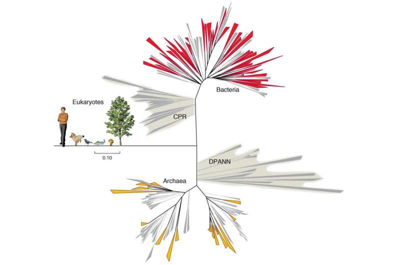 Newfound groups of bacteria are mixing up the tree of life