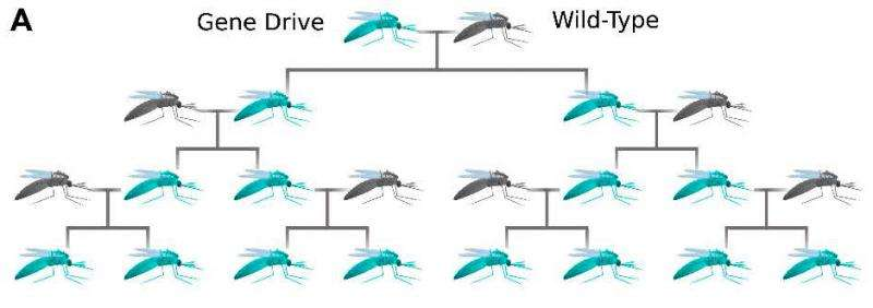New gene drive technology evokes hopes and fears