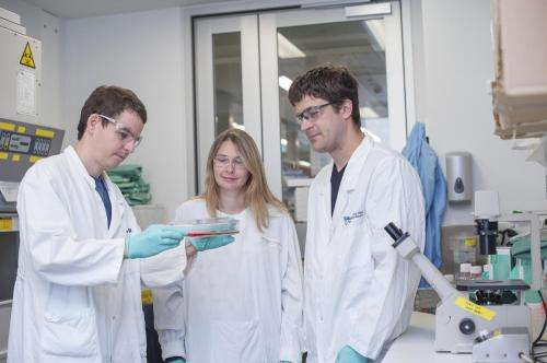 New genome-editing technology to help treat blood cancers