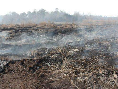 New research outlines global threat of smoldering peat fires