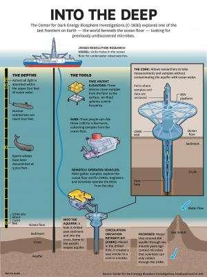 New species discovered beneath ocean crust