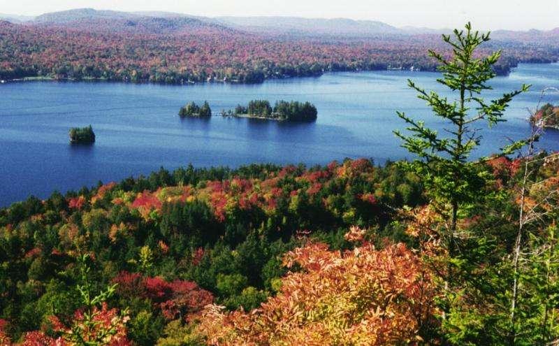 New study rings alarm for sugar maple in Adirondacks