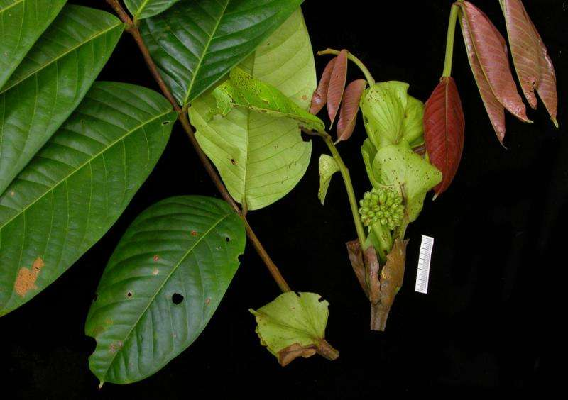 New tropical tree species await discovery