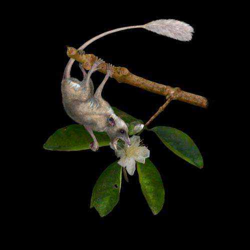 New UF study reveals oldest primate lived in trees