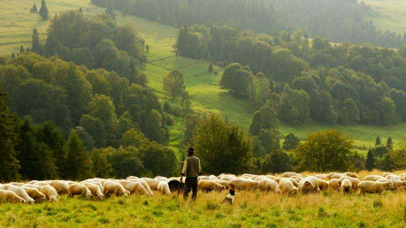 Non-native species are transforming grassland ecosystems