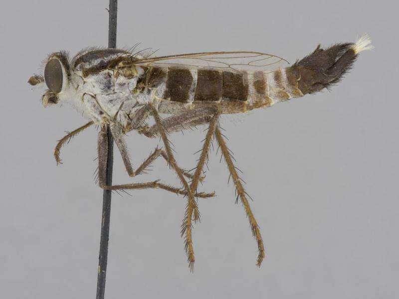 Novel cybercatalog of flower-loving flies suggests the digital future of taxonomy