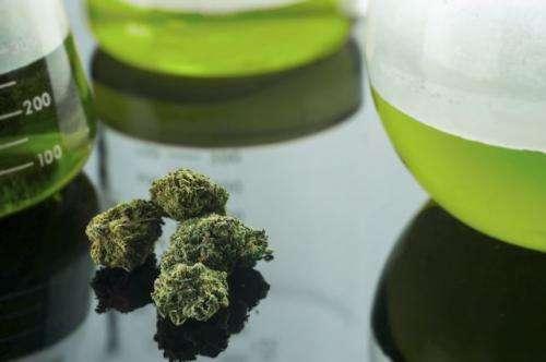 Number of medical marijuana dispensaries surpasses limit set by Los Angeles voters