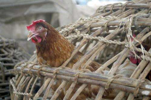 Officials say there is no indication the bird flu outbreak in Nigeria was the H5N1 strain, which has killed more than 400 people