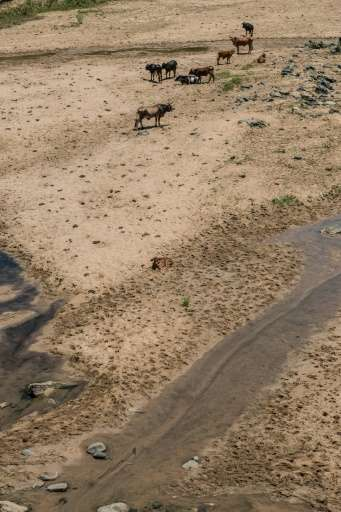 On the cracked earth, hundreds of cattle wander in search of the last drinking hole or that rare blade of grass