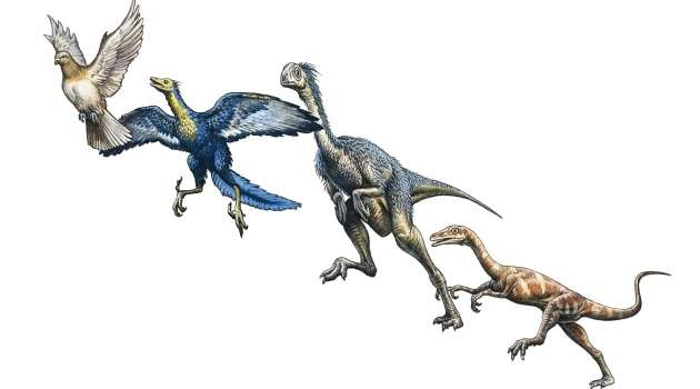 Origins of feathered dinosaurs more complex than first thought