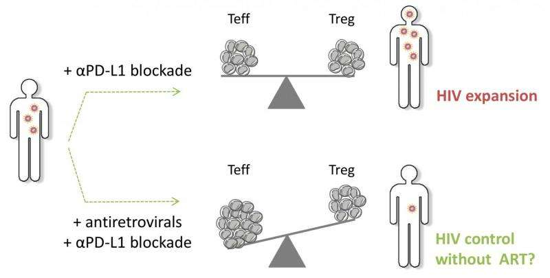 Overcoming immune exhaustion from chronic HIV infection -- the roles of PD-L1 blockage, regulatory T cells, and viral load
