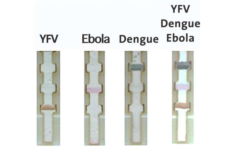 Paper-based test can quickly diagnose Ebola in remote areas (video)
