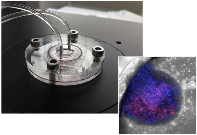 Partnership aims to replace animal experiments with advanced liver-on-chip devices