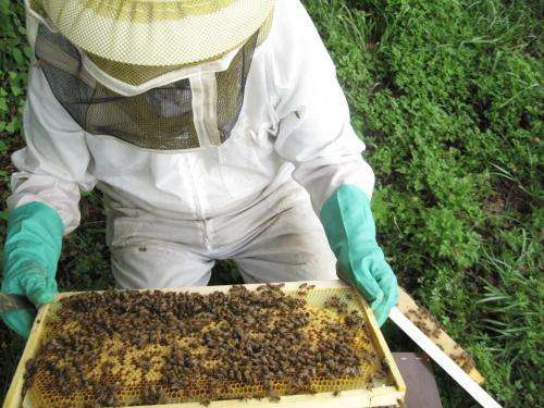Pesticides not the sole culprit in honey bee colony declines