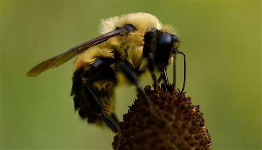Popular pesticide hurts wild bees in major field study