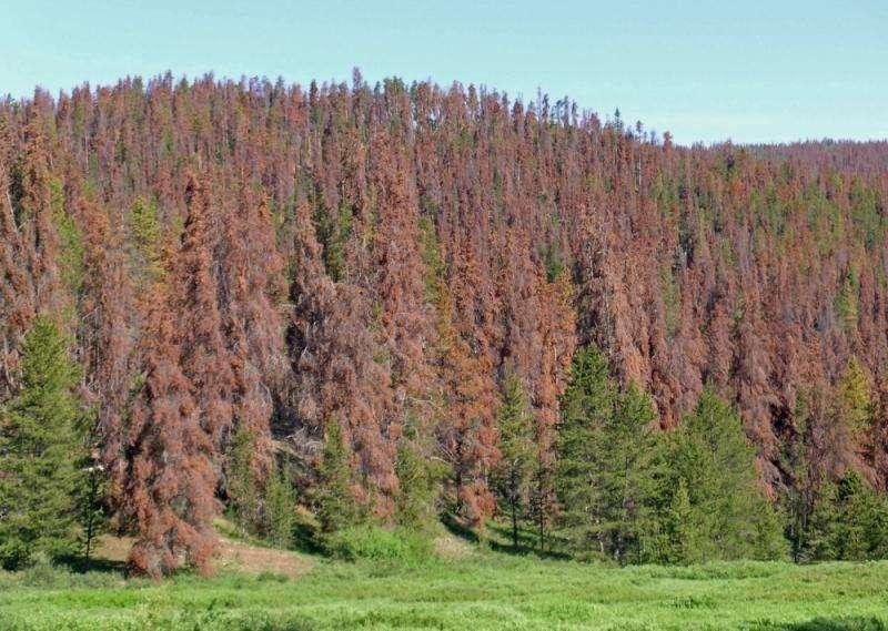Predicting tree mortality