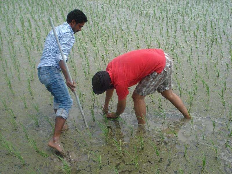 Protecting food, energy and livelihoods in Punjab