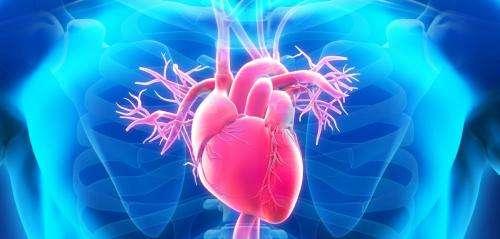 Protein clue to sudden cardiac death