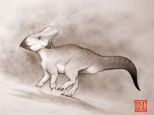 Rare fossil of a horned dinosaur found from 'lost continent'