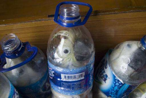 Rare Indonesian yellow-crested cockatoos, seen jammed inside plastic water bottles, confiscated from an alleged wildlife smuggle