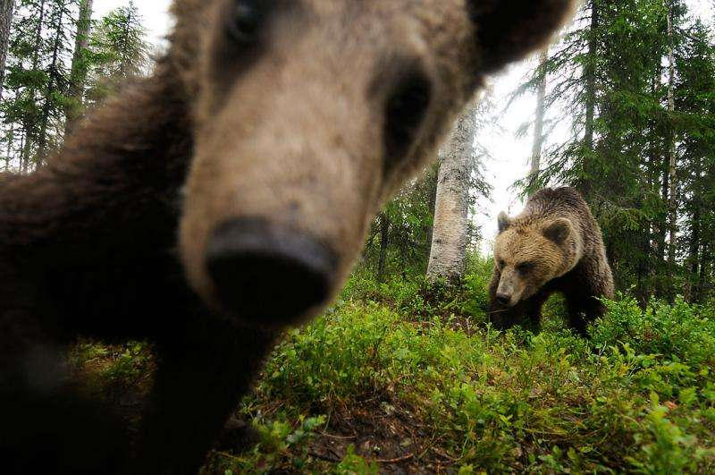 Record-breaking number of European citizens call to protect nature