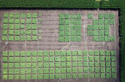 Report: Photosynthesis hack needed to feed the world by 2050