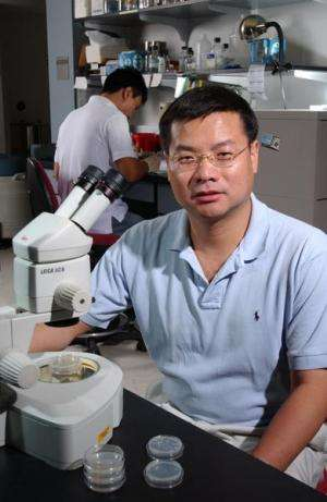Research findings have implications for regenerating damaged nerve cells