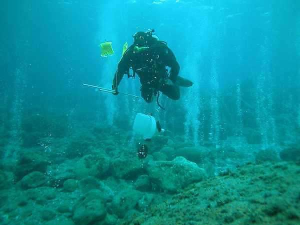 Rising carbon dioxide levels stunt sea shell growth