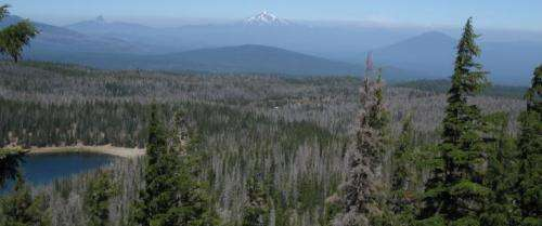 Satellites give scientists unprecedented views of insect outbreaks in forests
