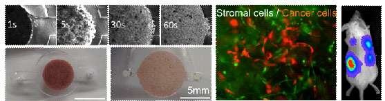 Scaffold-integrated microchips for end-to-end in vitro tumor cell attachment and xenograft formation