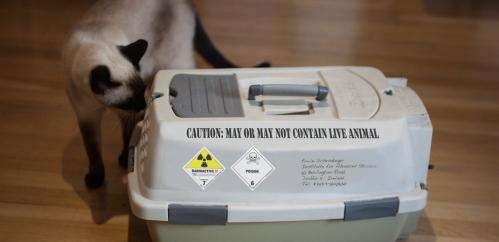 Schrödinger's cat gets a reality check