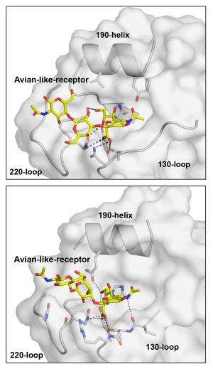 Scripps Research Institute study shows 2 new flu strains do not yet easily infect humans