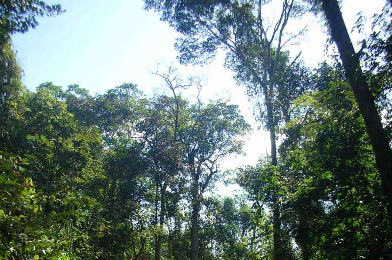Selectively logged Amazon forests play important role in climate