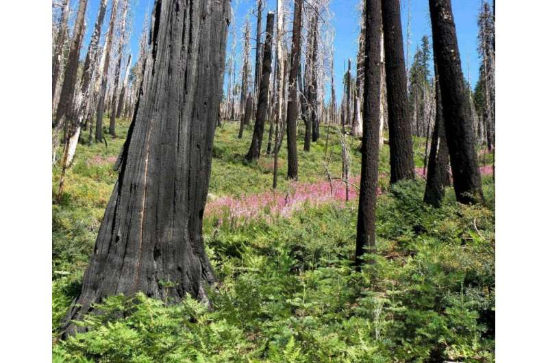 Severe wildfires not increasing in western dry forests, study finds