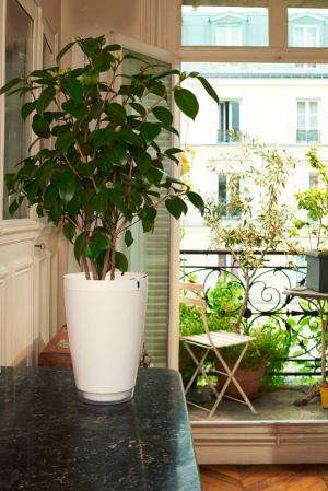 'Smart pot' watches over house plants