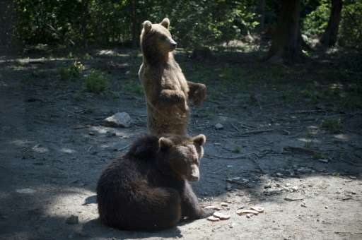 "So far, two million euros have been invested in the ""Libearty"" bear sanctuary, which welcomed more than 20,000 tourist"