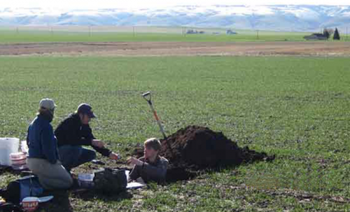 Soil organic matter susceptible to climate change