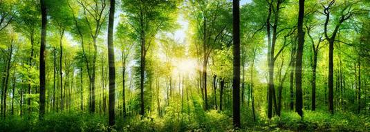 Solar energy: Hydrogen for all seasons