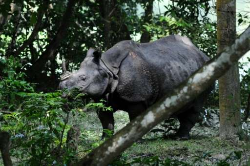 Some 14 rhinos and hundreds of other animals died during floods in 2012, many of them mown down by vehicles as they left a natio