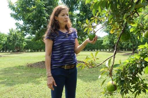 South Florida farmer Victoria Barnes holds an avocado from one of her trees on October 7, 2015 in Redland, Florida an area under